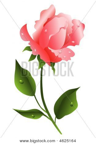 Vector Illustration Of Pink Rose