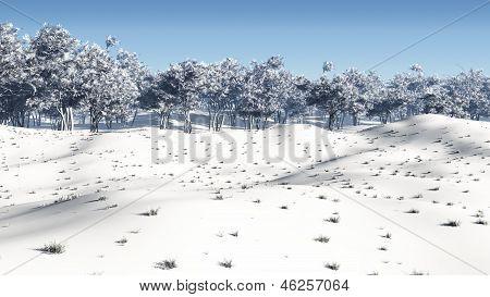 Winter-Niederwald