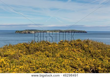 Caldey Island Pembrokeshire Wales