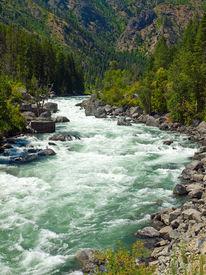 A River Flowing Through A Mountain Forest - Wenatchee River Washington Usa