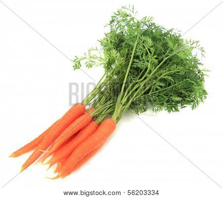 Fresh carrots. All on white background.