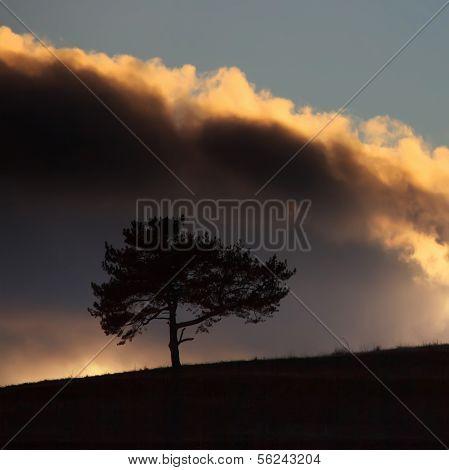 Square Tree Landscape