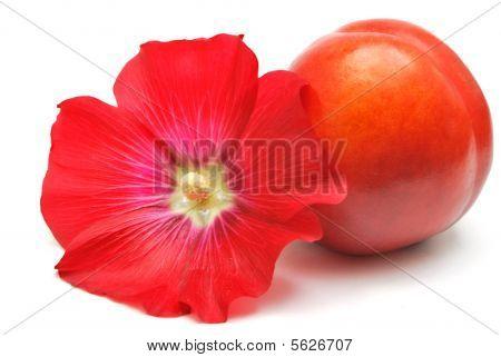Nectarine And Mallow