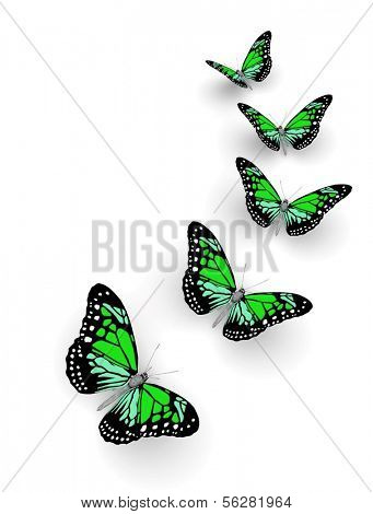 poster of Five butterflies isolated on white. 3d illustration
