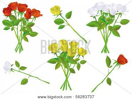 Vector illustration set of different colorful roses. All roses are isolated and grouped and can all be used individually. Colors and transparent background color are easy to adjust.
