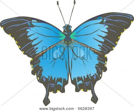 Blue And Black Butterfly Illustration
