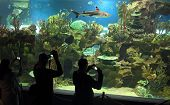 people shooting shark in oceanarium poster