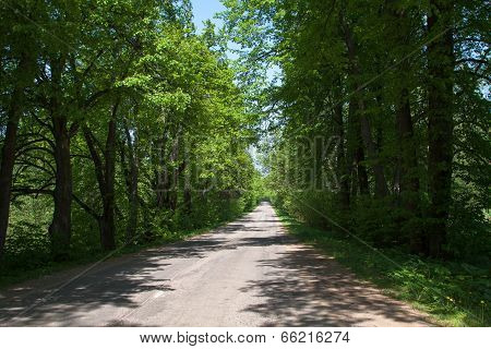 Forest Road In The Summer