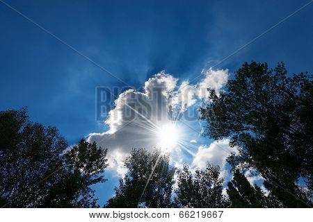 Black Silhouettes Of Trees On Blue Sky