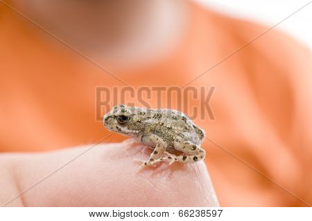 Juvenile frog in the hand of a child