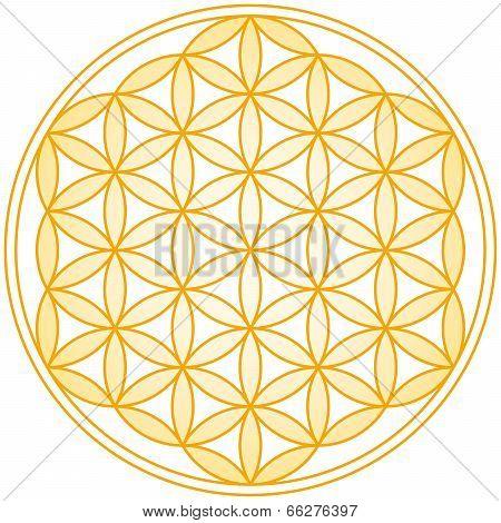 Flower of Life Golden Gradient