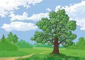 Landscape, summer green forest, oak tree and blue sky. Vector poster