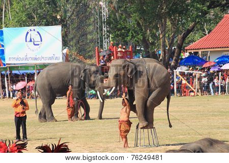 Elephant standing on the chair