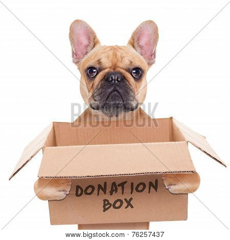 Donation Box Dog