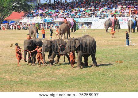 Elephant start to play hula hoop