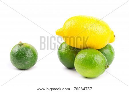image of a fresh whole lime and lemon isolated on white poster