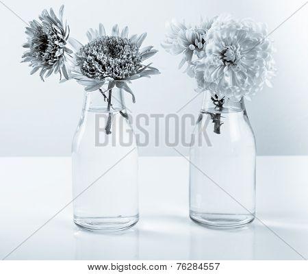 White chrysanthemum petals