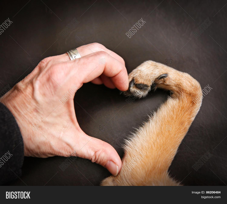 Dog Paw And Hand Making Heart Shape