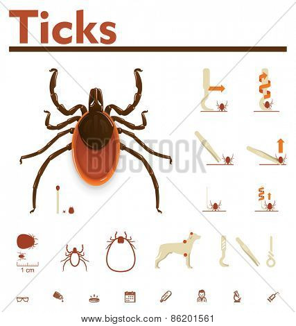 Vector image of tick and removal process poster