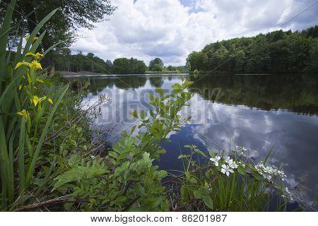 Les Mille Etangs, reflection on a lake, Vosges, France