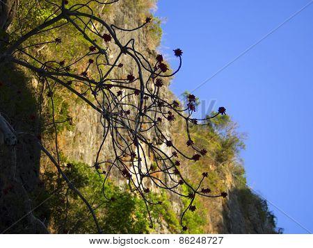 Koh Phi Phi Leh Cliffs.