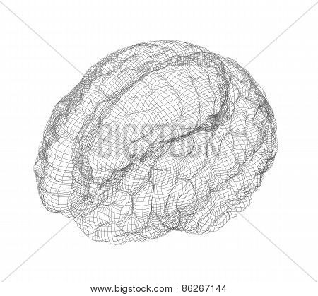 Wire-frame of brain with occipital region