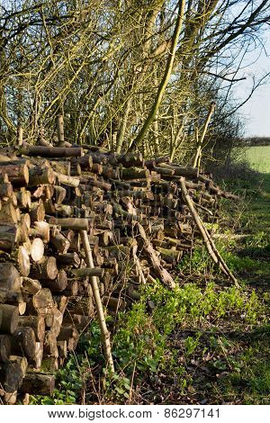 Coppiced Wood  Stacked In Woodpile