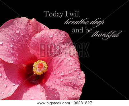 Close-up Of Pink Hibiscus In Corner Isolated With Quote