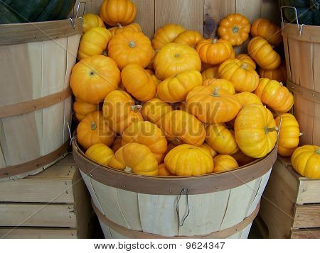 Mini Pumpkin Squash