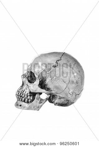 Still Life,black And White Of Human Skull