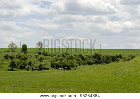 Background of sky, clouds and field with grass, trees, milch-cow