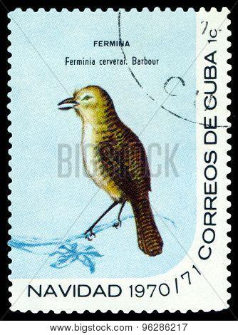 Vintage  Postage Stamp.  Bird Zapata Wren.