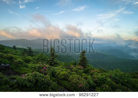 Roan Mountain Spring Rhododenron Blooms 3