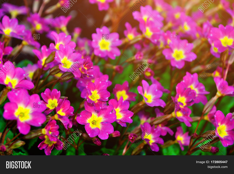 Blooming Spring Image Photo Free Trial Bigstock