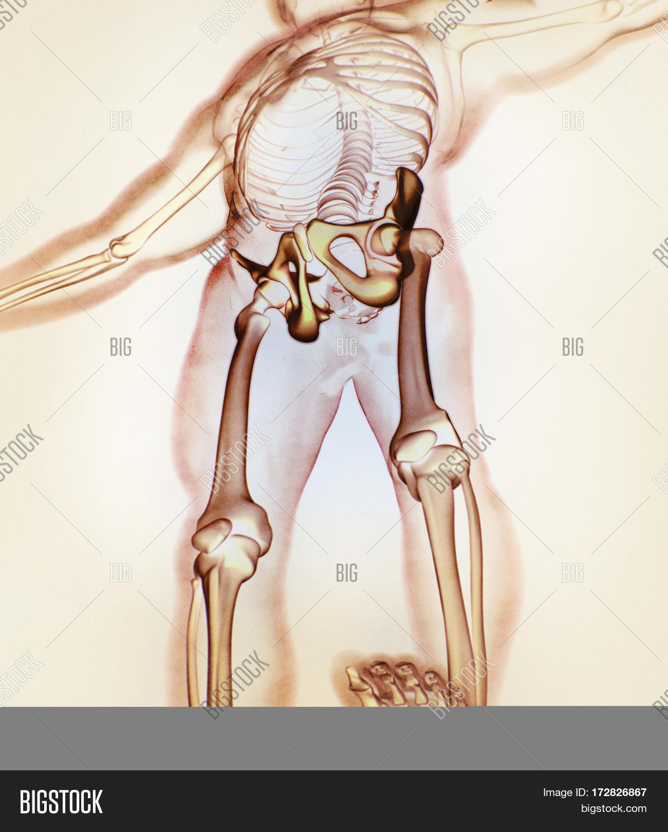 Ilium Bone Hip Bone Image Photo Free Trial Bigstock