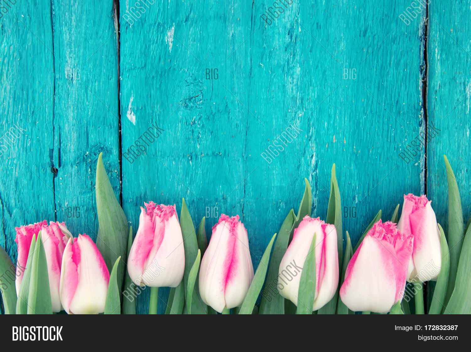 Frame Of Tulips On Turquoise Rustic Wooden Background Spring Flowers Greeting