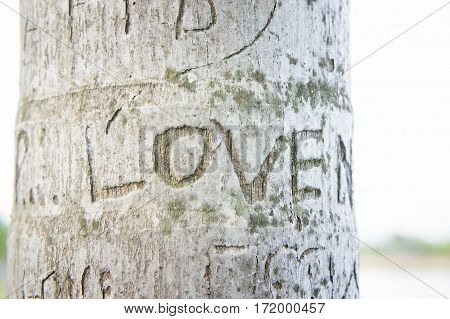 The Tree carvings etched the word love.