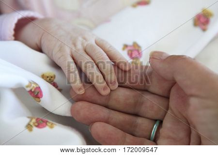 The image of hands of parent and the child