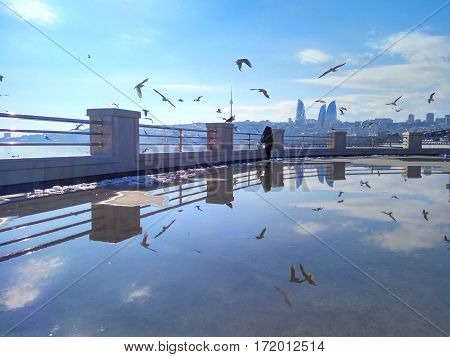 A flock of seagulls reflecting in a puddle after rain on the boulevard in Baku
