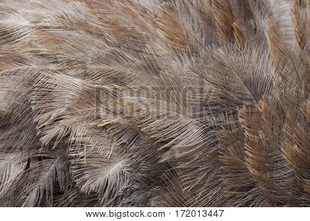 Fantastic gray ostrich feathers in a collage.