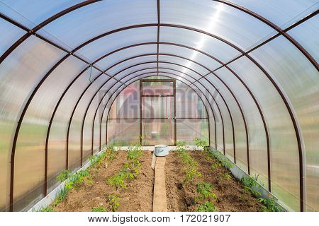 New Greenhouse Made Of Polycarbonate, Inside View