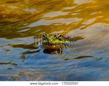 Царевна Лягушка в ожидании Ивана царевича. Река. The Frog Princess, waiting for Ivan Tsarevich. River.