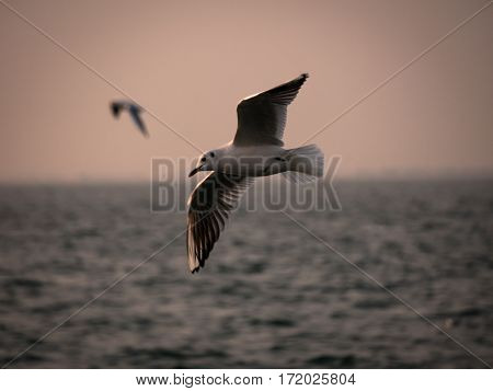 One Seagull Bird Flying By The Sea