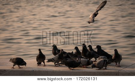 Group Of Pigeon Eating By The Sea
