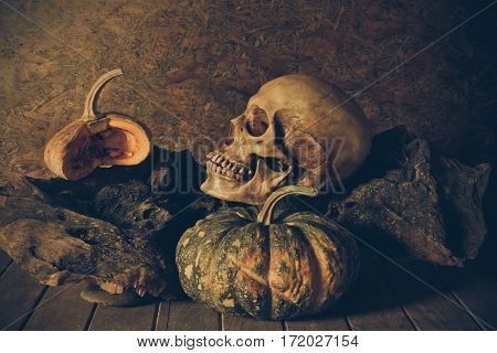 Still Life Skull and pumpkin on the timber. A symbol of Halloween