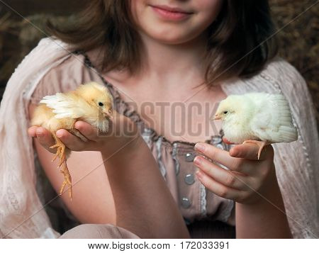 Female farmer holding baby Chicks chickens. Chickens white and yellow