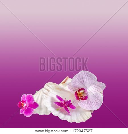 Colored Orchid Flowers And Sea Shells, Isolated, Cutout, Orhideea Phalaenopsis
