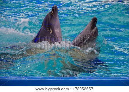Dolphins in dolphinarium in Odessa, Ukraine. Animals
