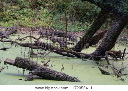 Bough in pond, abandoned place, swamp, tree