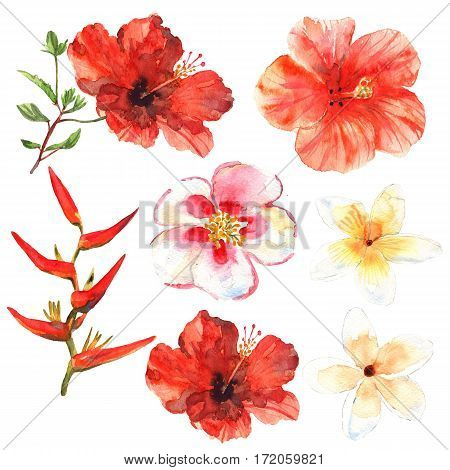 Floral set. Collection with tropical flowers drawing watercolor. Design for invitation wedding or greeting cards